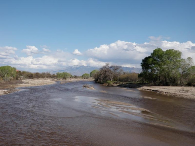 A riparian area in Tucson, Ariz. |  www.tucsonaz.gov